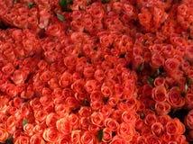 Cama de rosas Fotografia de Stock