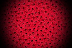 Cama de rosas Fotos de Stock Royalty Free