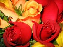 Cama de rosas Imagenes de archivo