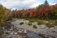 Cama de Stony Creek foto de stock royalty free