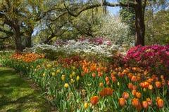 Cama de tulipán de la primavera en jardín meridional fotos de archivo libres de regalías
