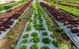 Cama de vegetais verdes fotos de stock