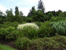 Cama del jardín de la colección del arbusto de Cornell Botanic Garden Fotografía de archivo libre de regalías