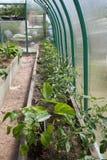 Cama do jardim com os vegetais na estufa fotografia de stock