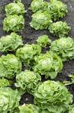 Cama do jardim de atribuição Fotografia de Stock Royalty Free
