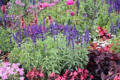 Cama do jardim decorativo com flores da mistura Fotografia de Stock Royalty Free