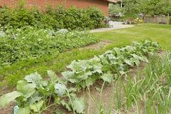 Cama do jardim do quintal com crescimento da cebola verde Fotografia de Stock Royalty Free