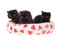 Cama suave del corazón persa negro de los gatitos aislada Imágenes de archivo libres de regalías