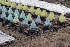 Cama vegetal con las cubiertas y el paño grueso y suave del jardín foto de archivo libre de regalías