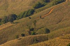 Camada agradável de árvore em tempo ajustado do sol Imagem de Stock Royalty Free