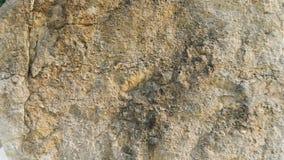 Camadas da rocha da dolomite de Diplopora Pena para a escala Fotos de Stock