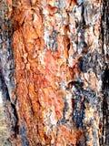Camadas de madeira Imagens de Stock Royalty Free