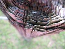 Camadas em um registro de madeira Fotografia de Stock