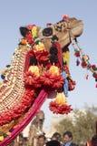 Camal adornado Foto de archivo