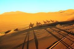 Camal caravan on a Nomad trip through sand desert.  Royalty Free Stock Photos