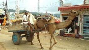 Camal rider in pushkar Royalty Free Stock Photo