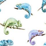 Camaleão dos répteis do teste padrão do vetor da aquarela Fotografia de Stock