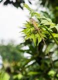 Camaleão nas folhas Fotos de Stock