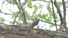 Camaleón en el árbol en selva tropical tropical metrajes