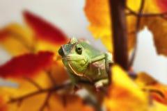 Camaleón en el follaje Foto de archivo libre de regalías