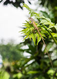 Camaleón en las hojas Fotos de archivo