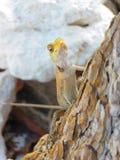Camaleón en un árbol Imagenes de archivo