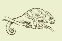 Camaleón Gráfico del vector Imagen de archivo libre de regalías