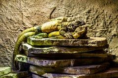 Camaleones que ponen en uno a Imagen de archivo