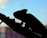Camaleonte nella città Fotografie Stock Libere da Diritti