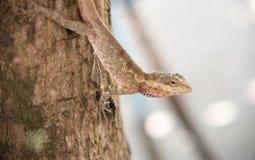 Camaleonte sull'albero sul fondo della natura Fotografia Stock