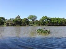 Camalotes no rio Fotografia de Stock Royalty Free