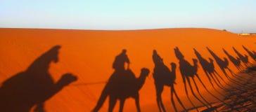 Camals in de Sahara Royalty-vrije Stock Fotografie