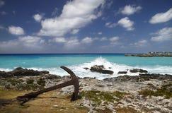 Caïman grand de vague déferlante des Caraïbes Image stock