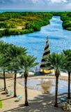 Camana海湾圣诞节树 图库摄影