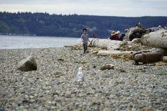 Camano Island State Park Washington Stock Photos