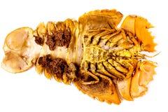 Camarão de louva-a-deus isolado dentro no branco Foto de Stock