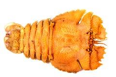 Camarão de louva-a-deus isolado dentro no branco Foto de Stock Royalty Free