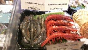 Camarão do anjo e close-up vermelho do jumbo do camarão do rei fotografia de stock