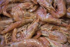 Camarão em uma tenda no mercado de peixes Foto de Stock