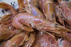 Camarão em uma tenda no mercado de peixes Imagens de Stock Royalty Free