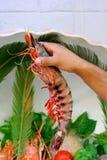 Camarão fresco fotografia de stock