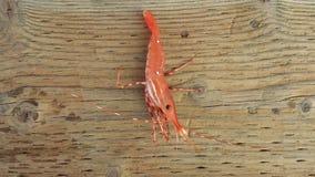 Camarão fresco foto de stock