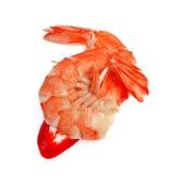 Camarão fresco isolado no fundo branco Imagem de Stock
