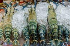 Camarão fresco no mercado Foto de Stock