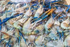 Camarão fresco no mercado Fotos de Stock