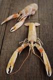Camarão fresco Scampi Foto de Stock