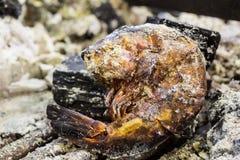 Camarão queimado Fotos de Stock Royalty Free
