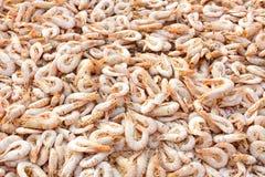 Camarão secado Fotografia de Stock