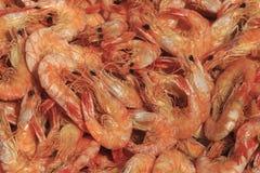Camarão secado para alimentos imagem de stock royalty free