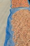 Camarão secado, camarão pequeno seco do pescador para a venda no marke fresco Imagem de Stock Royalty Free